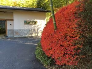 「別邸笹音」と紅葉。なかなか綺麗に撮れたw