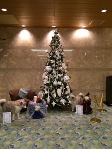 もうクリスマスの季節。ホテルのロビーにはクリスマスツリーが飾られていました。