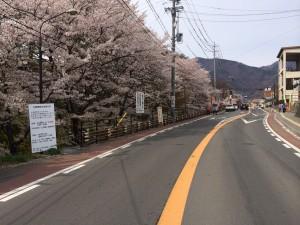 桜が満開の上田城周辺。こちらも人が多かったですね。