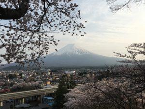 新倉山浅間公園から見る富士山。桜と富士山なんてなかなか見れない景色でした。
