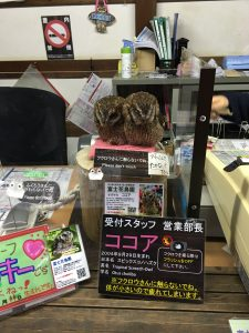 富士花鳥園の入り口にフルロウさんが。カワイイ。