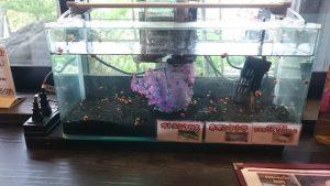 カウンター席には熱帯魚の水槽があります